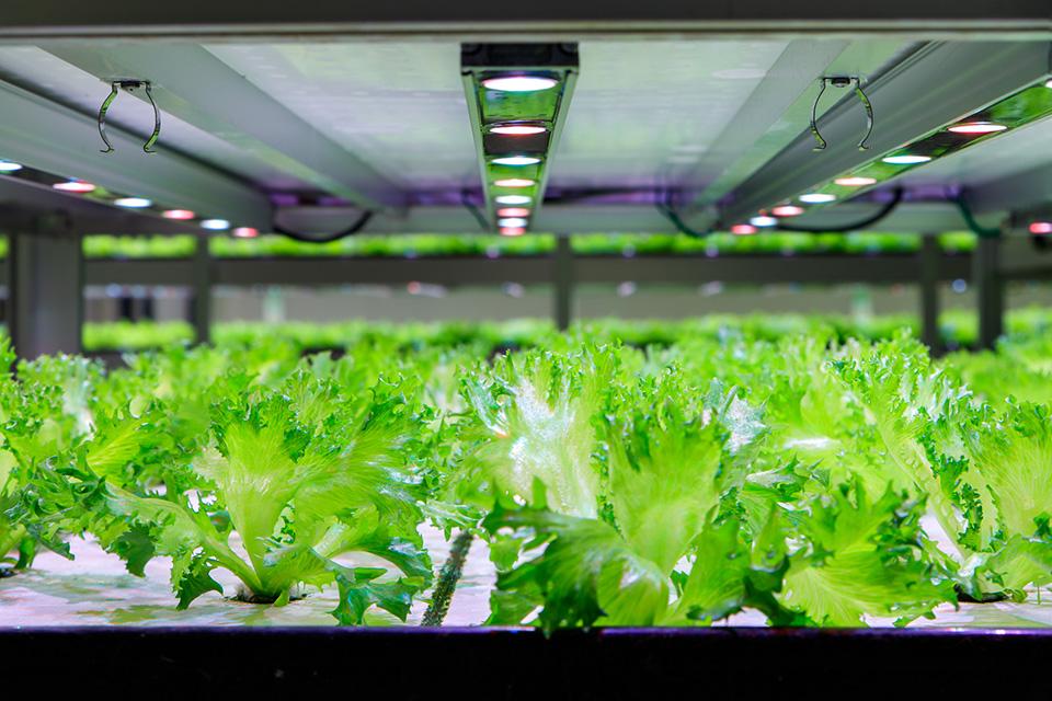 株式会社ミツイシ 柿田川野菜工房 LEDを使った水耕栽培